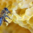 Honey comb and a bee — Stock Photo #29325123