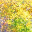 Stock Photo: Autumn leaves in brunches