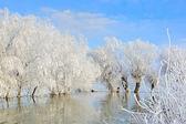 Paisaje de invierno con nieve cubierto de árboles — Foto de Stock