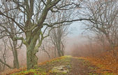 Fog in the forest — Stock fotografie
