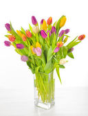 Vase of Tulips isolated — Foto de Stock
