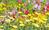 Fundo de campo de flores — Fotografia Stock