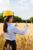 Female architect inside a wheat field — Stock Photo