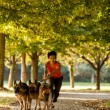 Woman in park with three german shepherds — Stock Photo