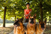 Woman is dog sitting with three german shepherds — Stock Photo