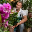 Florist is taking care of his plants — Stock Photo #34497433