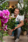Florist is taking care of his plants — Stock Photo