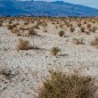 Stock Photo: Desert Plants in Death Valley