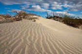 Mesquite Sand Dunes — Stock Photo