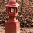 Red Lantern in a Resort in India — Stock Photo