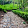Tea Garden in India — Stock Photo