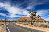 Joshua Tree Road — Stockfoto