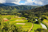 Hanalei Valley — Stock Photo