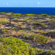 Volcanoes National Park Coast — Stock Photo #14810903
