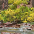 Virgin River on a Rainy Day — Stock Video