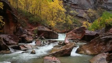 Rainy autumn day on the Virgin River in Zion Canyon National Park, Utah.