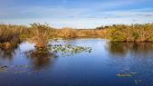 Everglades Panorama — Stock Photo