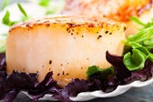 Pan Seared Scallop — Stock Photo