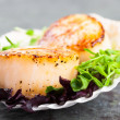 Pan Seared Scallops — Stock Photo