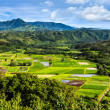 Stock Photo: Hanalei Valley Panorama