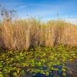 Stock Photo: Everglades Pond