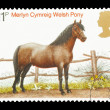 Welsh Pony — Stock Photo