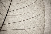 Leaf cell macro — Stock Photo