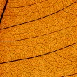 Leaf structure — Stock Photo