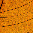 Stock Photo: Leaf structure