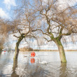 Stock Photo: Flooded parkland