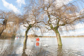 Flooded parkland — Stock Photo