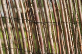 Willow fencing — Stock Photo