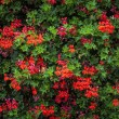 Colorful floral background - Zdjcie stockowe