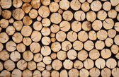 Pile of wood logs — Foto Stock
