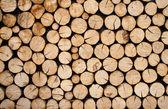 Pilha de toras de madeira — Foto Stock