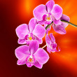 Pink orchid on abstract blurred background - Stock Photo