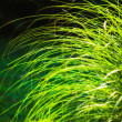Long leaves of grass illuminated by sun — Stockfoto