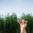 Naked woman against green reeds and blue sky — Stok fotoğraf