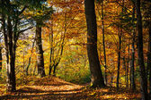 Autumn day in the forest — Stock Photo