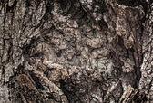 Corteza de árbol viejo — Foto de Stock