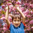 Boy with hands up against cherry blossoms background — Stock Photo #28427215
