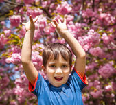 Boy with hands up against cherry blossoms background — Stock Photo