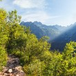 View of High TatrMountains from hiking trail. — Stock Photo #30309593