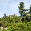 Stones and young pine trees on the slopes of the High Tatras — Stockfoto