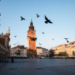 Pigeons in morning Krakow — Stock Photo #30390771