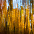 Motion blur of trees in an autumn forest — Stock Photo