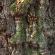 Trunk of an old tree — Stockfoto