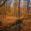 Autumn forest with creek — Stock fotografie