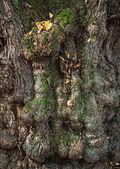 古い木のトランク — ストック写真
