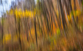 Abstract image of trees in an autumn forest — Stock Photo